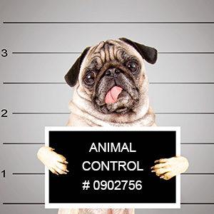 Animal Control Law